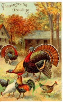 thanksgiving_day_postcards-00373 - 373-Turkey, Chickens, roosters [1864x3000]