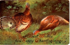 thanksgiving_day_postcards-00391 - 391-Turkey, Best wishes for a happy Thanksgiving [3000x1928]