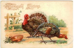 thanksgiving_day_postcards-00437 - 437-Turkey, plate [3000x1946]