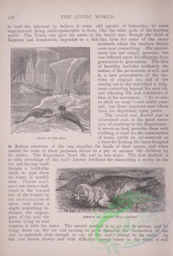 the_living_world-00102 - 119-Home of the Seal, Common Sea Hound, phoca vitulina