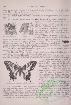 the_living_world-00210 - 229-Polyommatus Phlaeas, Thecla, Swallow-tail Butterfly