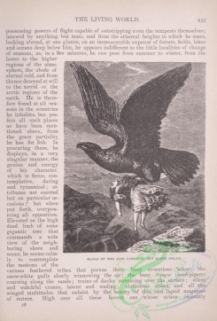 the_living_world-00372 - 393-Eagle of the Alps carrying off Marie Delax