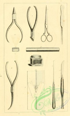 things-00358 - black-and-white Entomological implements, scissors
