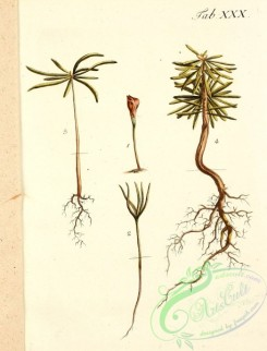 tree_branches-00115 - 025-unidentified