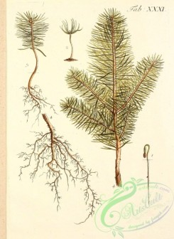 tree_branches-00116 - 026-unidentified