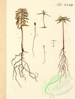 tree_branches-00118 - 028-unidentified