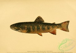 trouts-00001 - EASTERN BROOK TROUT