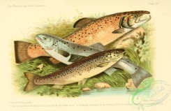 trouts-00015 - SALMON, GRILSE