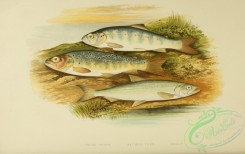 trouts-00031 - TROUT, SALMON PARR, SMELT