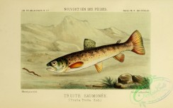trouts-00050 - Sea Trout, 2