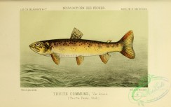 trouts-00051 - Sea Trout