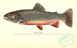 trouts-00073 - Brook Trout
