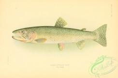 trouts-00089 - Alaska Cutthroat Trout