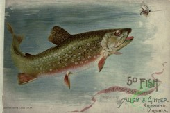 trouts-00135 - BROOK TROUT