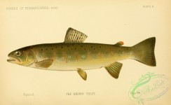 trouts-00151 - Brown Trout