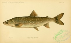 trouts-00152 - Lake Trout