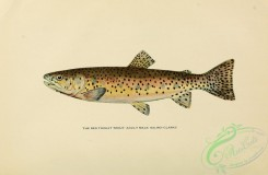 trouts-00183 - RED THROAT TROUT