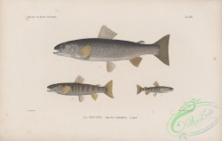 trouts-00265 - 016-Sea Trout, trutta variabilis