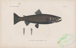 trouts-00266 - 017-Sea Trout, trutta variabilis