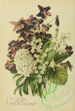 violet-00245 - Double English Violet, Large Single Purple Violet, Single White Violet, Hardy Candytuft, iberis sempervirens, Lily of the Valley, convallaria majalis