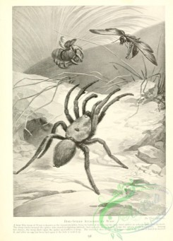 wasps-00003 - 020-Bird-Spider, Wasp