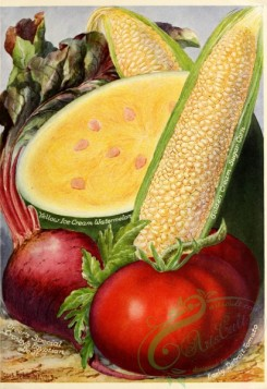 watermelon-00015 - 037-Corn, Watermelon, Tomato, Beet