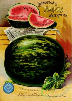 watermelon-00022 - 069-Watermelon on newspaper