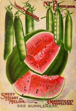 watermelon-00035 - 017-Pea, Watermelon