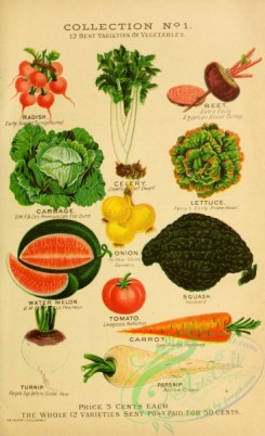 watermelon-00036 - 018-Small icons of vegetables, Watermelon, Tomato, Carrot, Lettuce, Beet, Radish, Squash