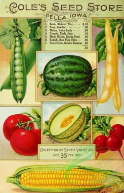 watermelon-00043 - 013-Pea, Watermelon, Bean, Tomato, Musk Melon, Radish, Sweet Corn