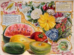 watermelon-00092 - 070-Vegetables, Flowers, Watermelon, Aquarium, salvia, coreopsis, rose, fuchsia, Tomato, Musk melon
