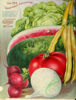 watermelon-00150 - 070-Watermelon, Tomato, Onion, Radish, Bean, Cabbage