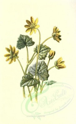 yellow_flowers-00039 - Lesser Celandine [1704x2772]